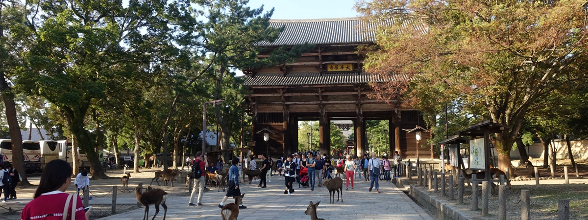 日本奈良-奈良公園