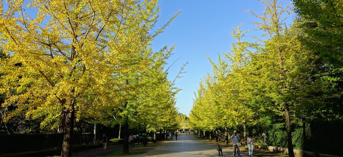 日本秩父-音樂堂公園