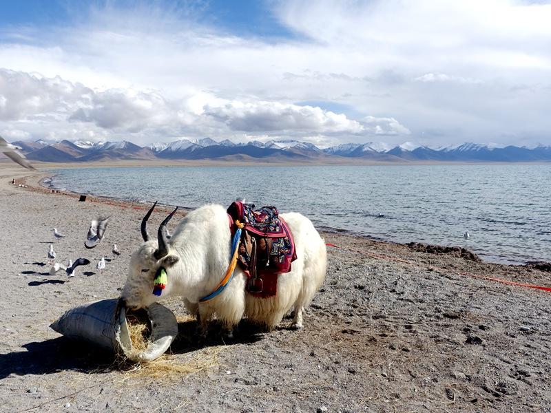 西藏布達拉宮~楚布寺~扎葉巴隱修地探索5日